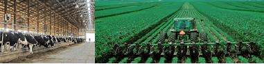 schaalvergroting landbouw.PNG