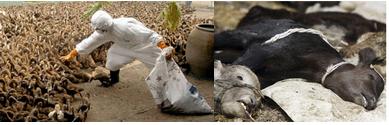 toename dierenziekten.PNG